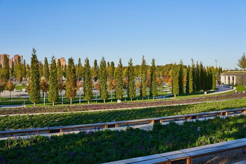 Krasnodar, Rusia - 7 de octubre de 2018: Filas delgadas del árbol de hoja perenne y de árboles de hojas caducas en la 'promenade' foto de archivo
