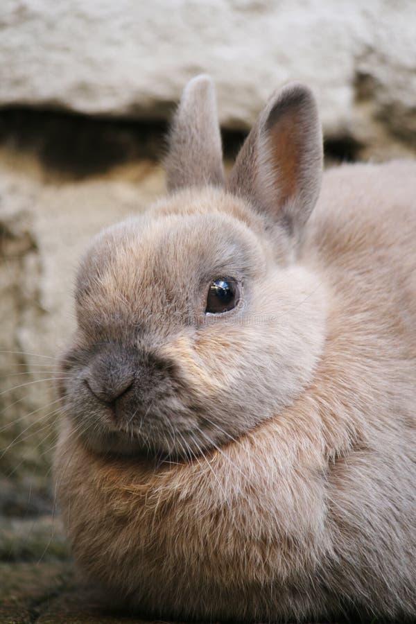krasnolud zbliżania królik. obraz stock