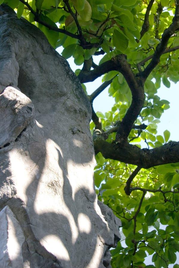 Krasu kamienny i kręcony drzewo obraz royalty free