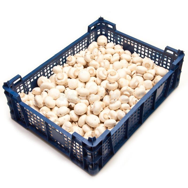 Krat van champignons stock afbeelding