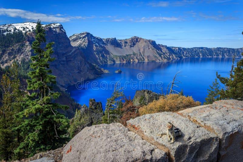 Krater sjöekorre royaltyfria foton