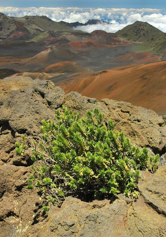 krateru haleakala Maui fotografia royalty free