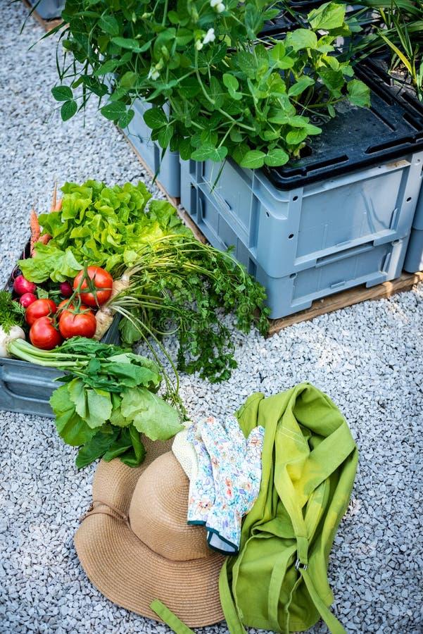 Krathoogtepunt van vers geplukte groenten, strohoed en handschoenen in een tuin Inlands bioopbrengsconcept royalty-vrije stock afbeeldingen