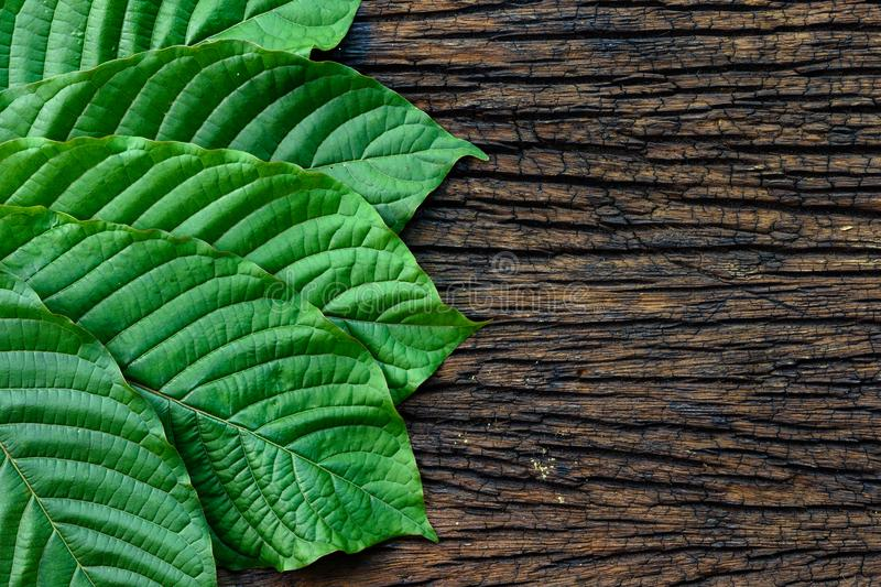 Kratom or Mitragyna speciosa leaves on the wood background royalty free stock images