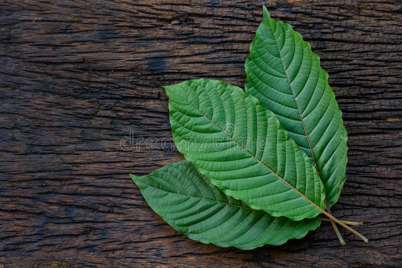 Kratom or Mitragyna speciosa leaves on the wood background royalty free stock photos