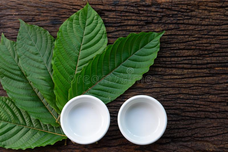 Kratom Mitragyna speciosa Mitragynine leaves with empty white ceramic bowls on wooden royalty free stock image