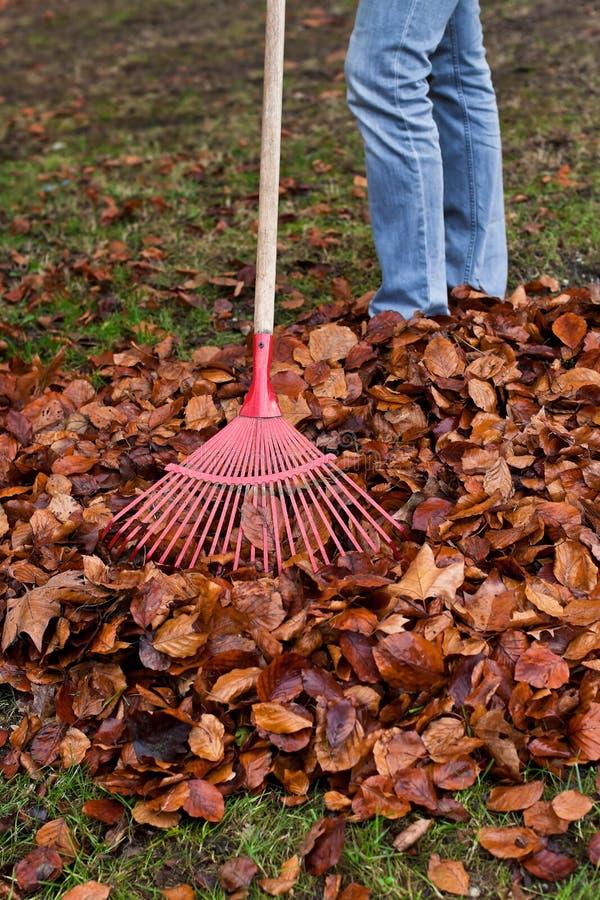 krattar arbeta i trädgården leaves för fall arkivfoto
