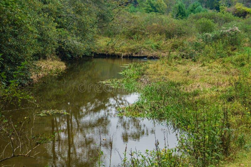 Krattar maler dammet, Floyd County, Virginia, USA royaltyfria foton
