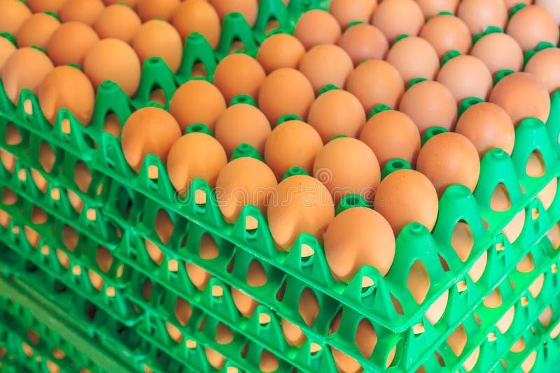 Kratten met verse eieren op een organisch kippenlandbouwbedrijf royalty-vrije stock afbeelding