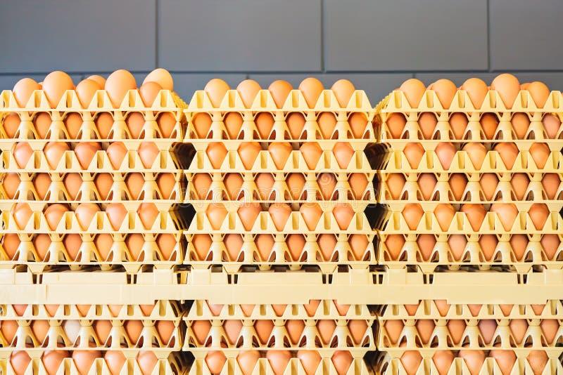 Kratten met verse eieren voor een grijze muur stock afbeeldingen