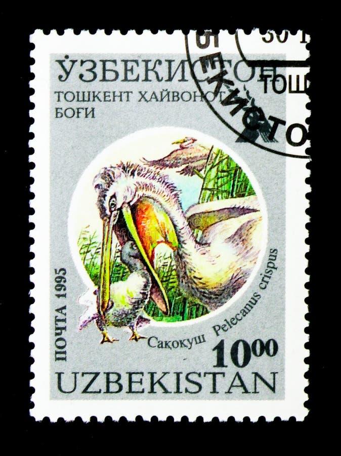 Krauskopfpelikan (Pelecanus crispus), Taschkent-Zoo serie, circa stockfotos