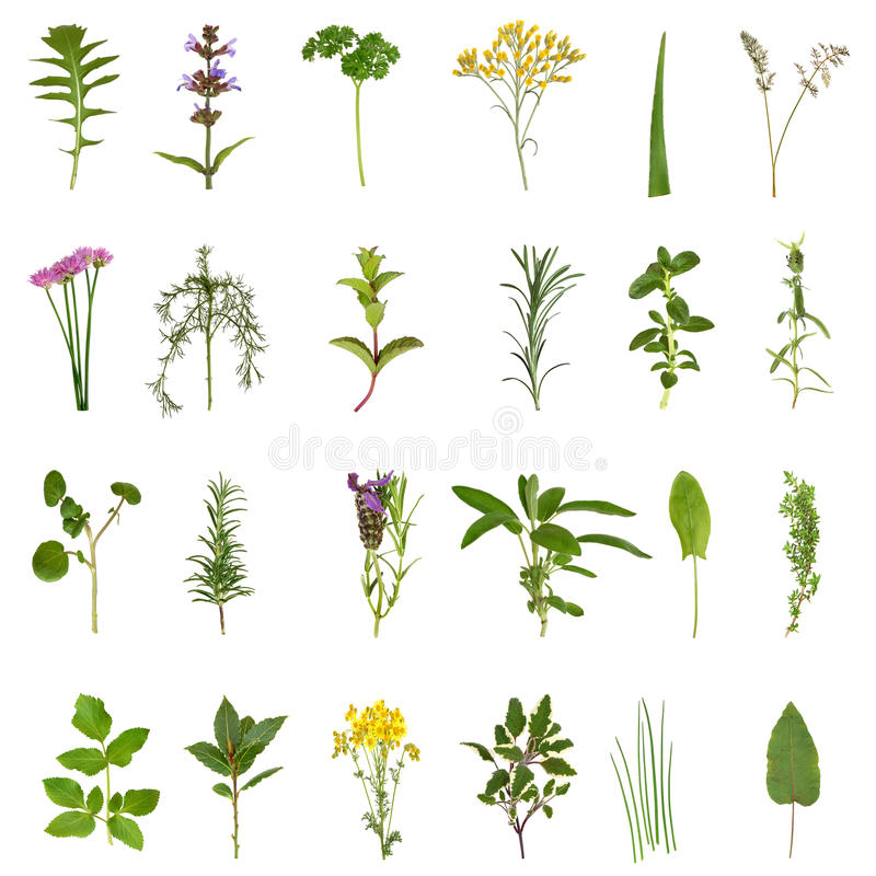 Kraut-Blatt-und Blumen-Ansammlung lizenzfreie abbildung