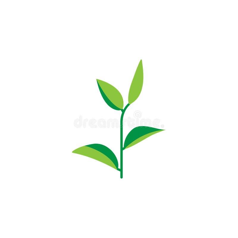Kraut, Ikone des grünen Tees Element der Krautikone für mobile Konzept und Netz Apps Ausführliches Kraut, Ikone des grünen Tees k lizenzfreie abbildung