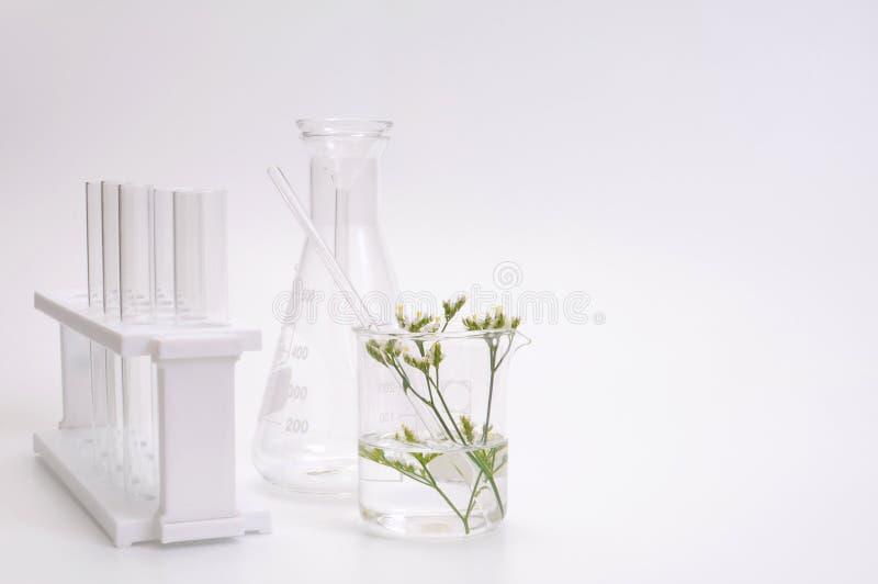 Kraut verlässt wissenschaftliche Ausrüstung erforschte kosmetisches lizenzfreie stockfotos
