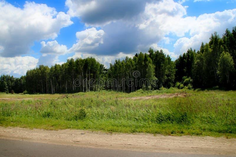 Krawędź las blisko drogi ilustracja wektor