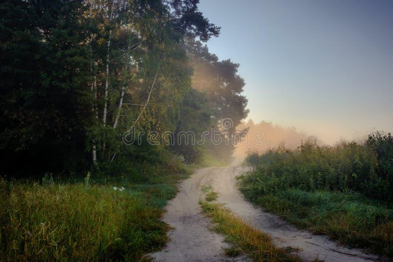 Krawędź las zakrywa z ranek mgłą obrazy royalty free