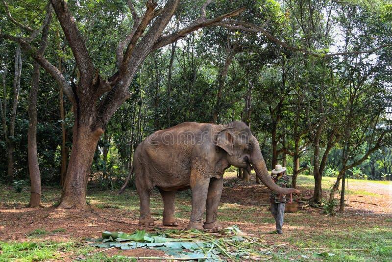 Krawat między mężczyzna i słoni gatunkami Prześciełanie ten sam rodzina zdjęcia stock