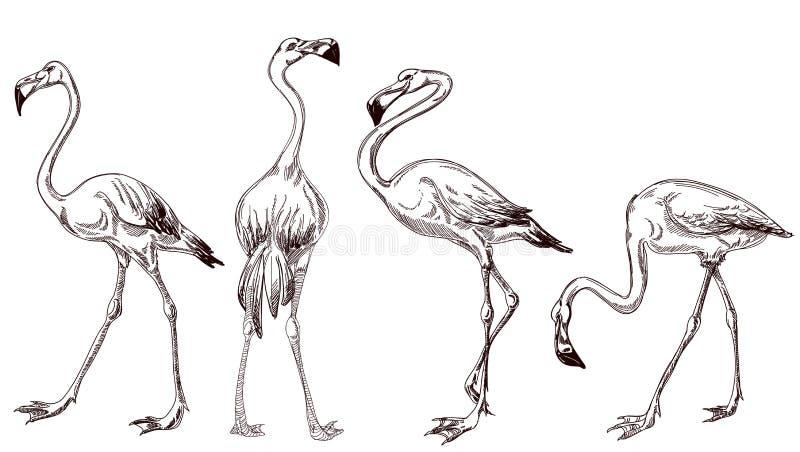 Kreślący flamingi ilustracja wektor