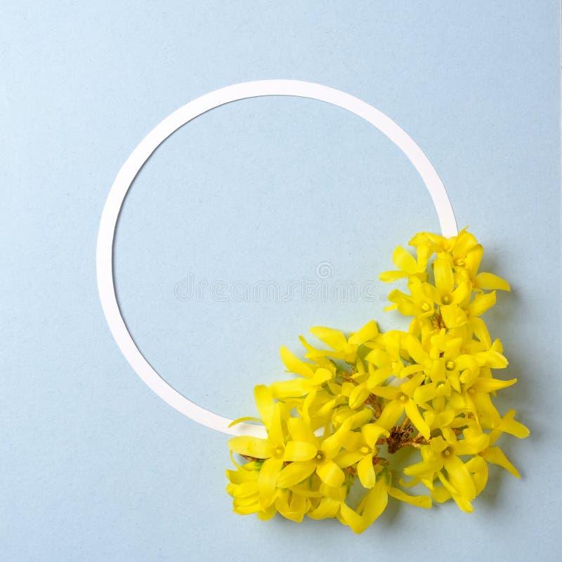 Kreative Anordnung f?r gelbe Blumen und Kreisentwurf auf blauem Pastellhintergrund Flache Lage Beschneidungspfad eingeschlossen o stockbild