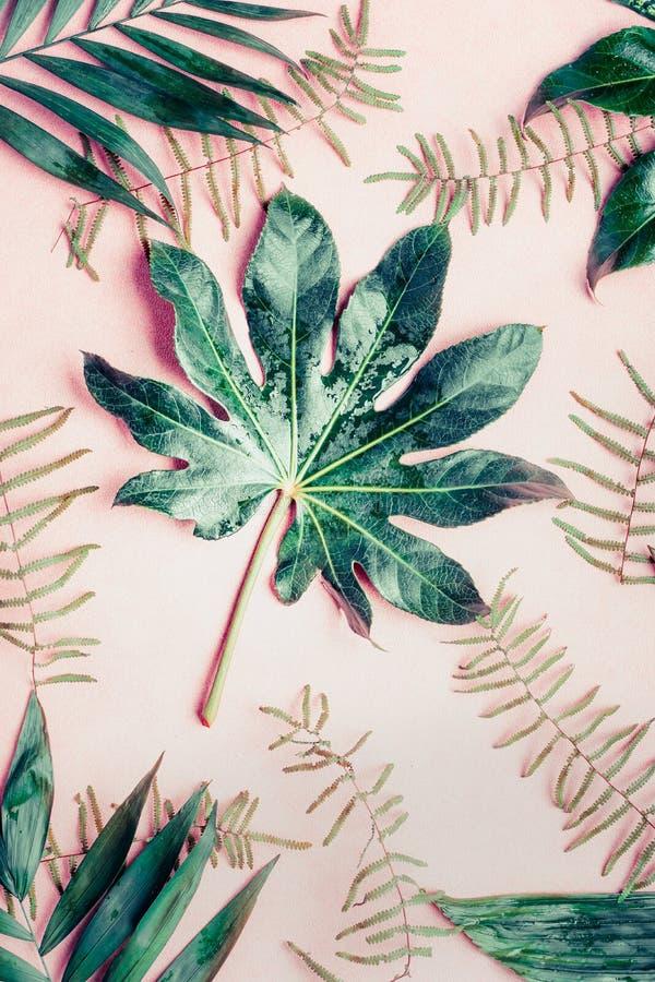 Kreative flache Lage mit verschiedenen tropischen Palmblättern auf Pastellrosahintergrund stockfoto