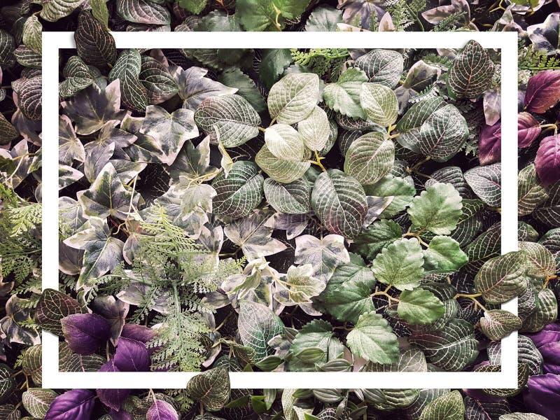 Kreative tropische grüne Blattbeschaffenheit für tropischen Sommer mit weißem Grenzrahmen, Laubnaturgrün-Blatthintergrund stockbilder