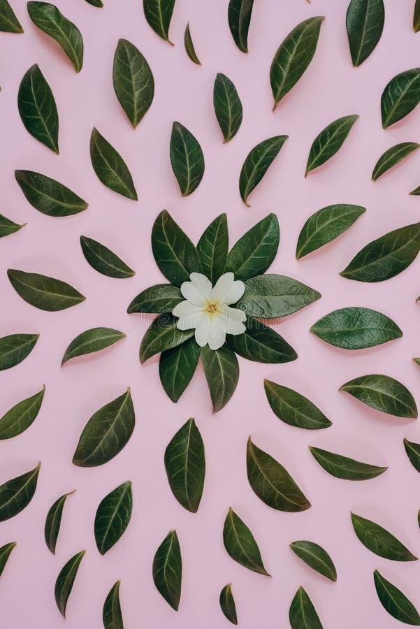 Kreative Zusammensetzung in den grünen kleinen Blättern und in der Blume stellte über rosa Hintergrund separat dar lizenzfreie stockbilder