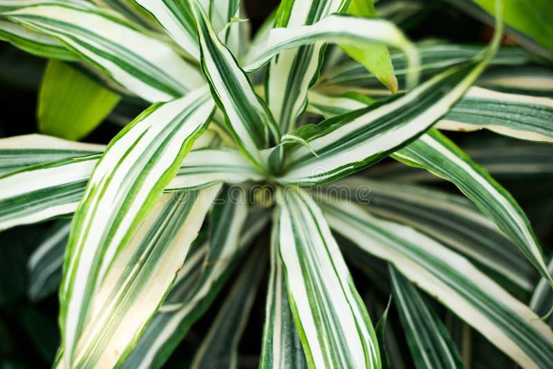 Kreativer Naturplan gemacht von den tropischen Blättern und von den Blumen Flache Lage Seashells gestalten auf Sandhintergrund stockfotografie