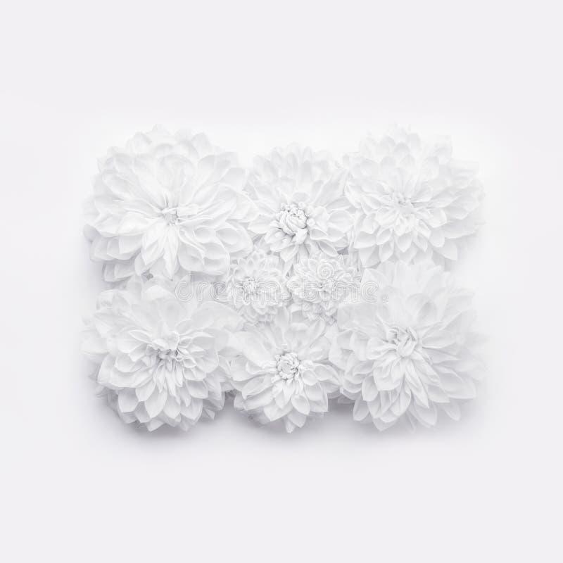 Kreativer Plan der weißen Blumen, Blumenmuster oder Hintergrund für Grußkarte des Muttertages, Geburtstag, Valentinsgruß ` s Tag, stockbilder