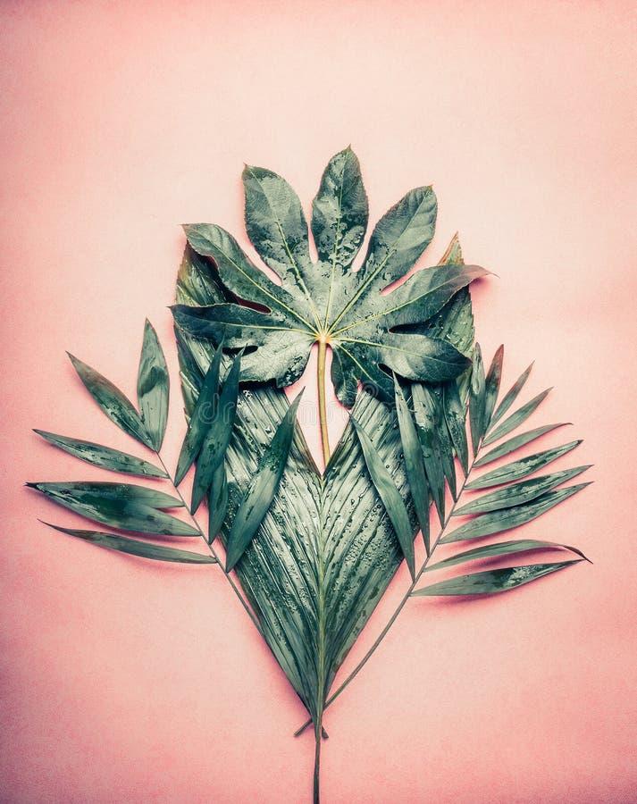 Kreatives Bündel verschiedene tropische Palmblätter auf Pastellrosahintergrund lizenzfreie stockbilder