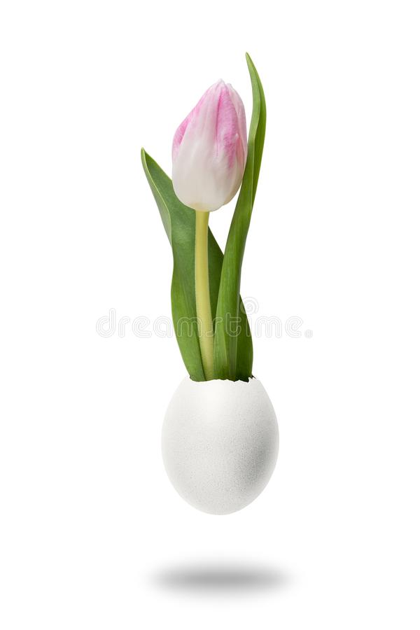 Kreatives Konzept gemacht mit Tulpenblumen- und -eierschale lizenzfreie stockfotos