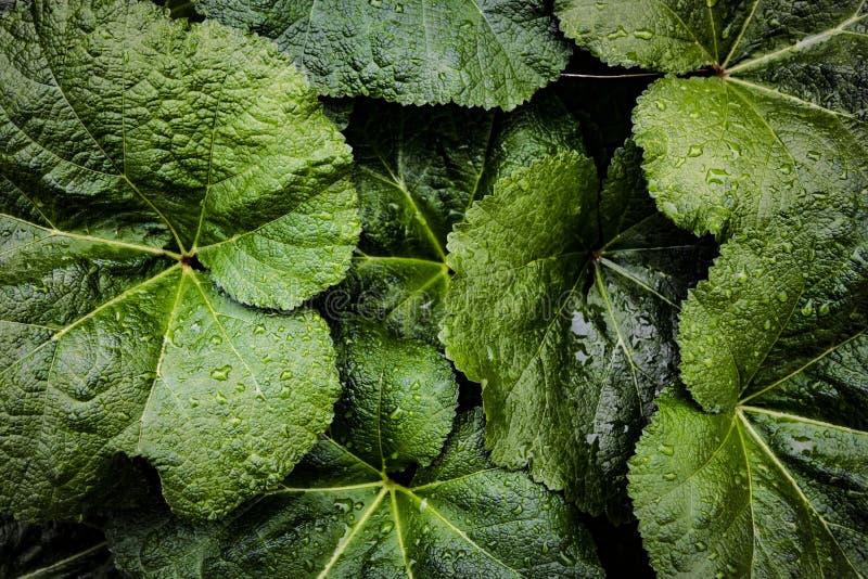 Kreatives tropisches Grün lässt Plan Naturfrühlingskonzept Flache Lage lizenzfreie stockfotografie