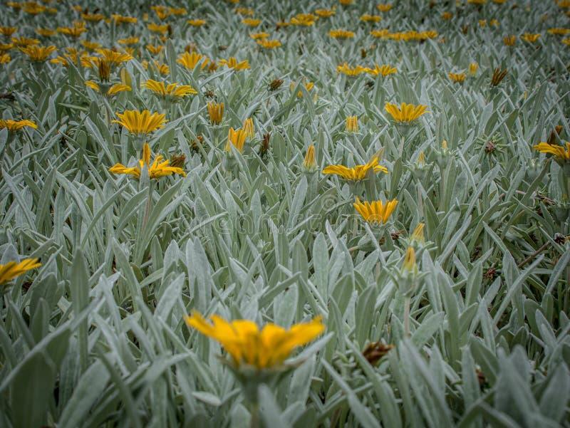 Kreatywnie fotografia kolor żółty kwitnie łąkę zdjęcia stock
