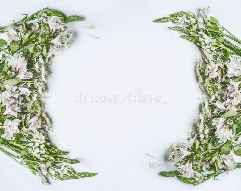 Kreatywnie piękny kwiecisty ramowy układ z kwiatami, płatkami i liśćmi na białym tle zieleni, fotografia stock