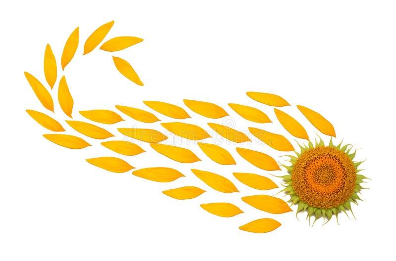 Kreatywnie pomysłu kwiat słonecznikowy sedno i płatki fotografia royalty free