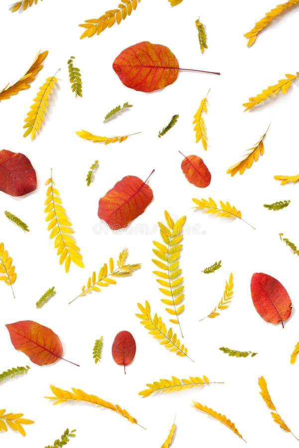 Kreatywnie przygotowania żółci i czerwoni jesień liście na bielu obrazy royalty free