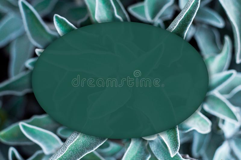 Kreatywnie pusty owal, zieleń, przejrzysty sztandar zdjęcia stock