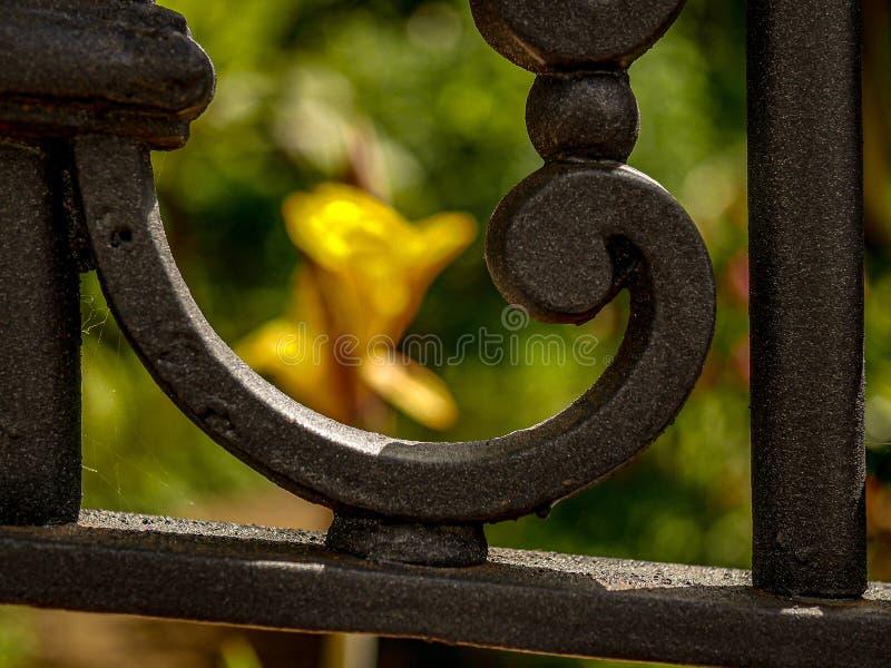 Kreatywnie szczegół dokonanego żelaza baroku ogrodzenie z okwitnięciem w tle fotografia royalty free