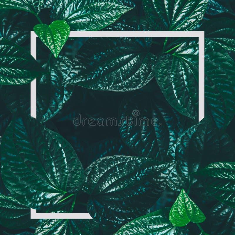 Kreatywnie układ, białego papieru ramy liścia tło obraz royalty free