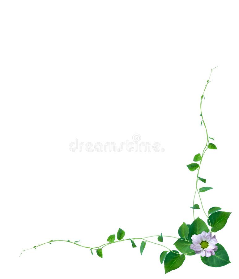 Kreatywnie układ robić kwiaty i tropikalny liść z papierowej karty notatką Mieszkanie nieatutowy Natury pojęcie, odizolowywający  ilustracja wektor