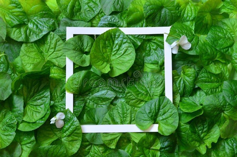 Kreatywnie układ robić liście z papier ramą Mieszkanie nieatutowy pojęcia odosobniony natury biel fotografia royalty free