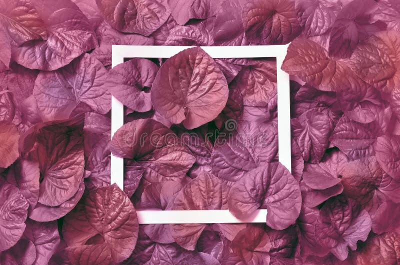 Kreatywnie układ robić liście z papierowej karty notatką Mieszkanie nieatutowy pojęcia odosobniony natury biel obraz royalty free
