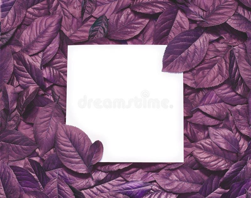 Kreatywnie układ robić liście z papierowej karty notatką Mieszkanie nieatutowy pojęcia odosobniony natury biel fotografia royalty free