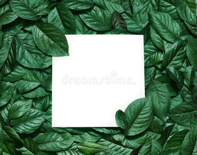 Kreatywnie układ robić liście z papierowej karty notatką Mieszkanie nieatutowy pojęcia odosobniony natury biel fotografia stock