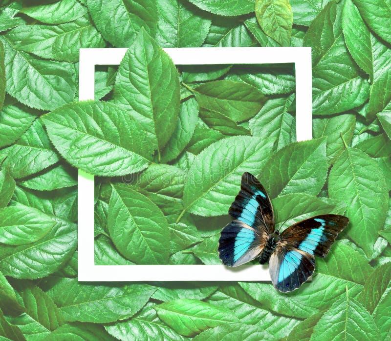 Kreatywnie układ robić liście z papierowej karty notatką Mieszkanie nieatutowy pojęcia odosobniony natury biel obraz stock