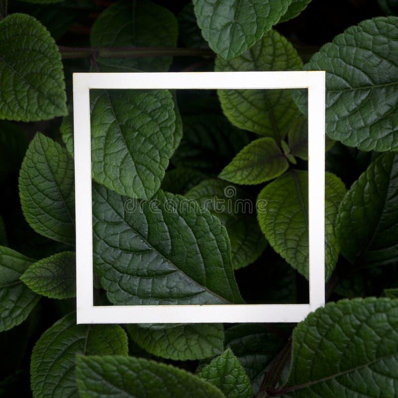 Kreatywnie układ robić opuszcza z białego papieru ramą Mieszkanie nieatutowy pojęcia odosobniony natury biel obraz stock