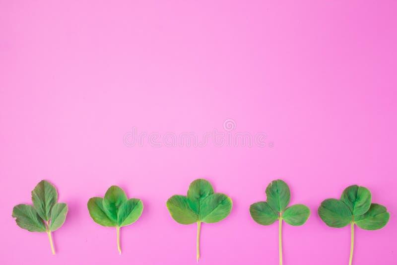 Kreatywnie uk?ad Rama od zieleni gałąź, liście na różowym tle Minimalny poj?cie, mieszkanie nieatutowy, odg?rny widok zdjęcia royalty free