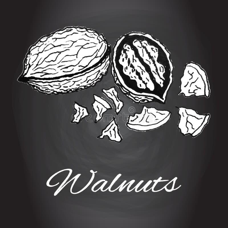 Kreda rysująca nakreślenie orzechów włoskich wektorowa Czarny i biały kuchenna sztuka ilustracja wektor