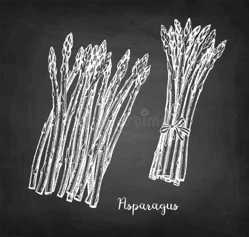 Kredowy nakre?lenie asparagus ilustracji
