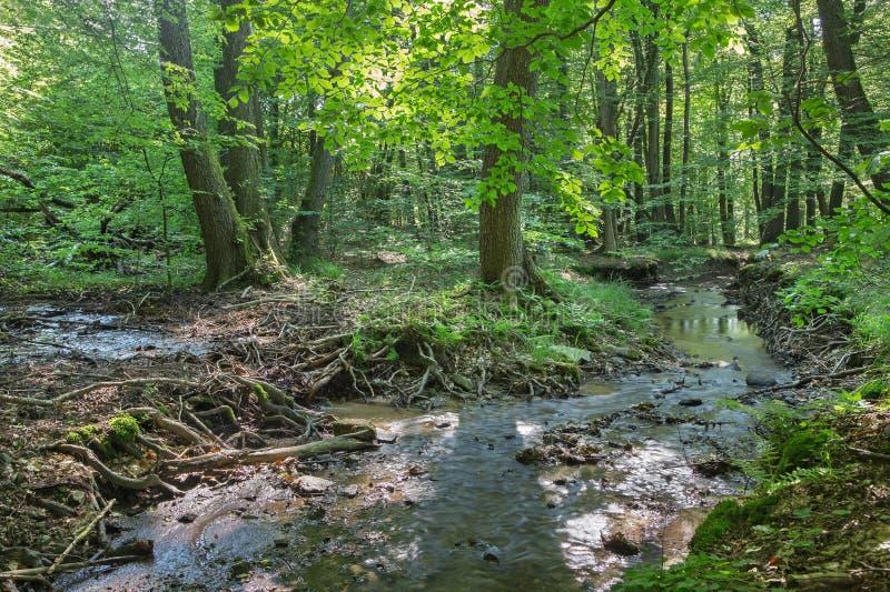 Kreek in bos van Karpatisch weinig royalty-vrije stock afbeeldingen