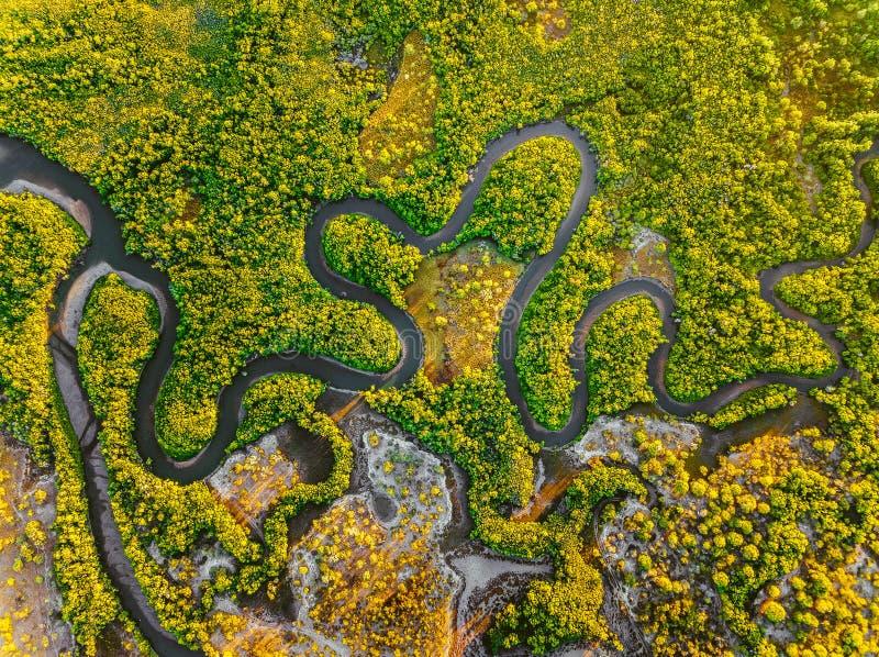 Kreek die tussen de mangroven kronkelen stock foto